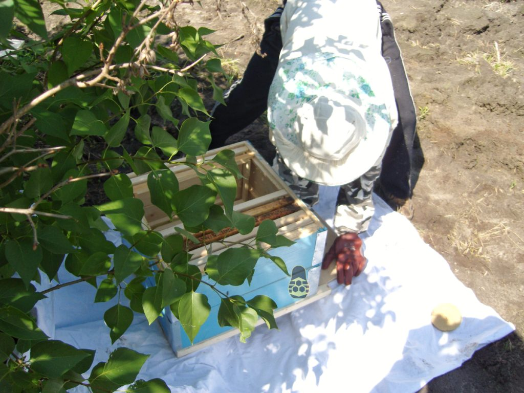 подготовка перед переносом роя пчёл