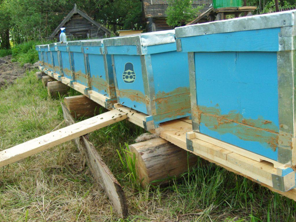 10 пойманных пчелиных роёв