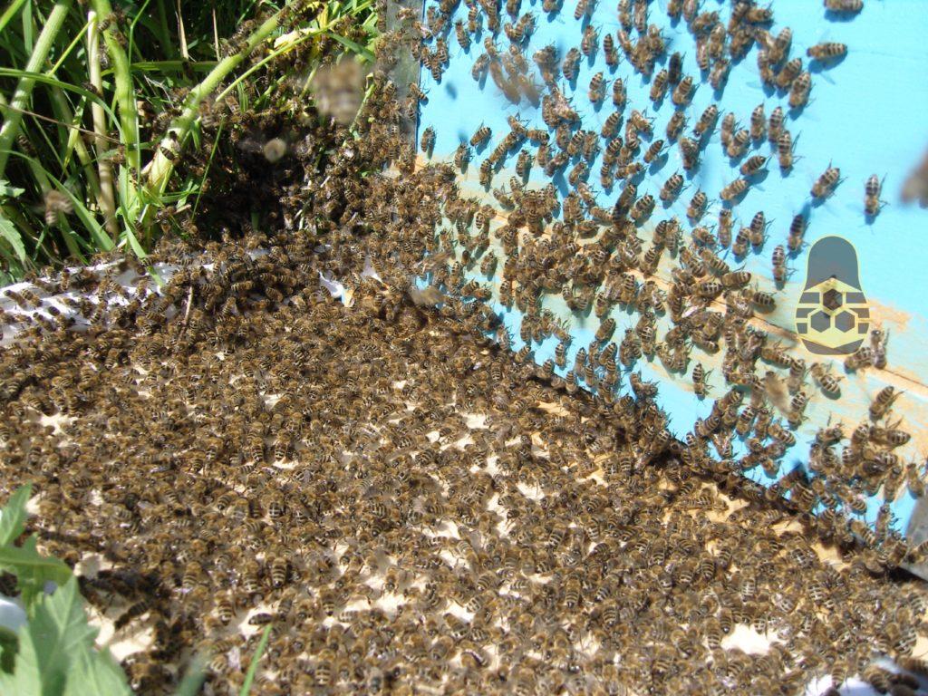 река пчёл