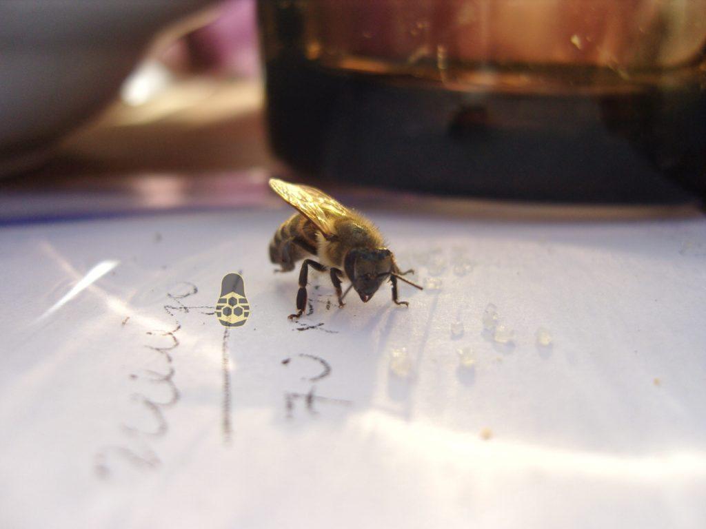 пчела на чаепитие